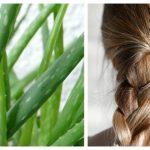 Как применять сок алоэ для лечения волос от выпадения и ломкости?