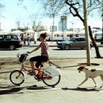Зачем жителям мегаполисов нужны домашние животные